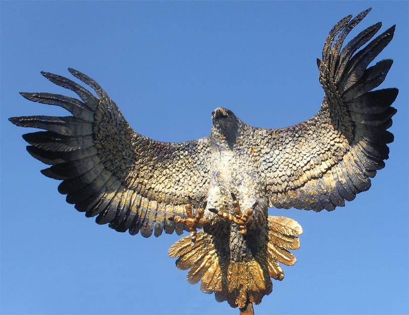 Irfan Ay / Hobiler / Doğan Kuşu
