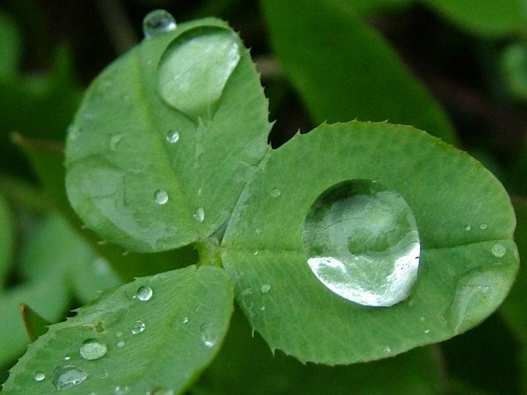 Irfan Ay / Hobiler / Yağmur Damlaları