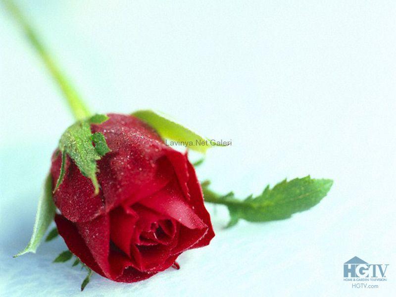качать видио плакали розы каждом загородном